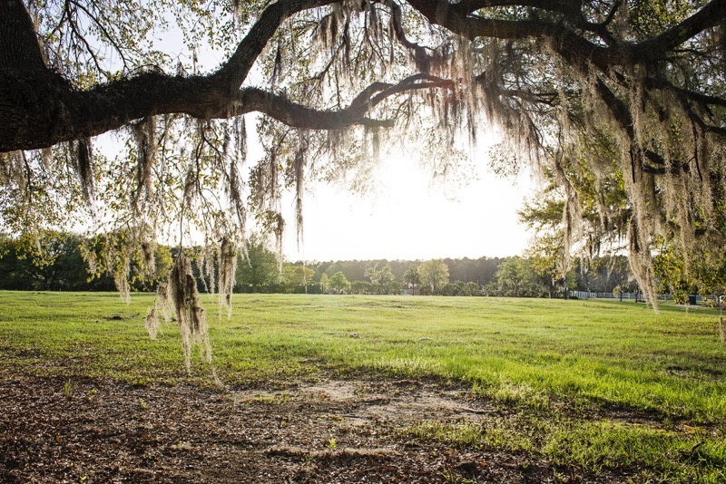 Oldfield_South_Carolina_Britney_Clause_Photography_024
