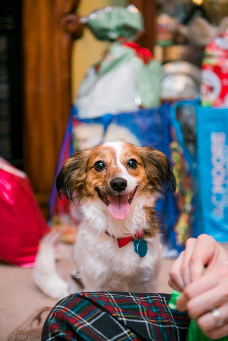 maryland-wedding-photographer-dog-papillon-baltimore-0008-photo