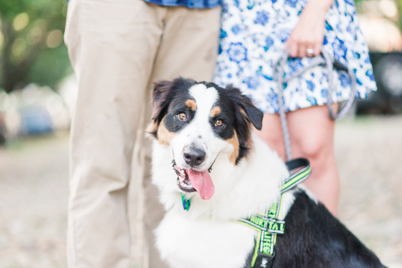 old town alexandria engagement photography virginia maryland dog