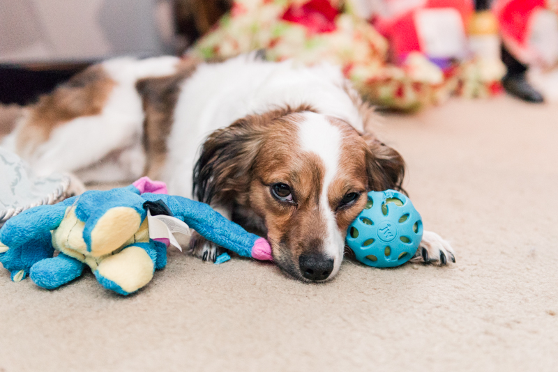 lazy puppy with no productivity