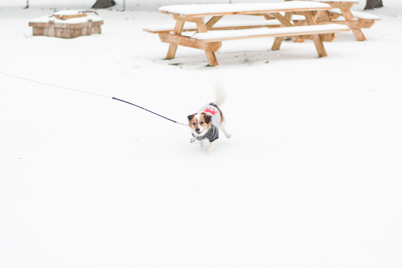 baltimore maryland snow winter 2017