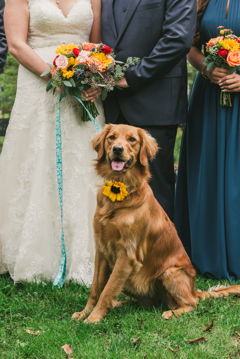 Chanteclaire Farm Wedding Photographer Friendsville Maryland Dog Party