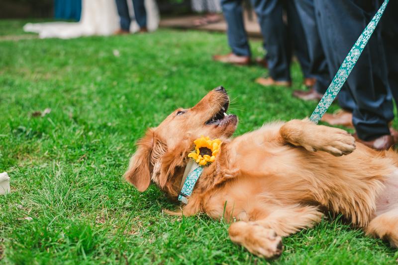 Chanteclaire Farm Wedding Photographer Friendsville Maryland Ceremony Dog